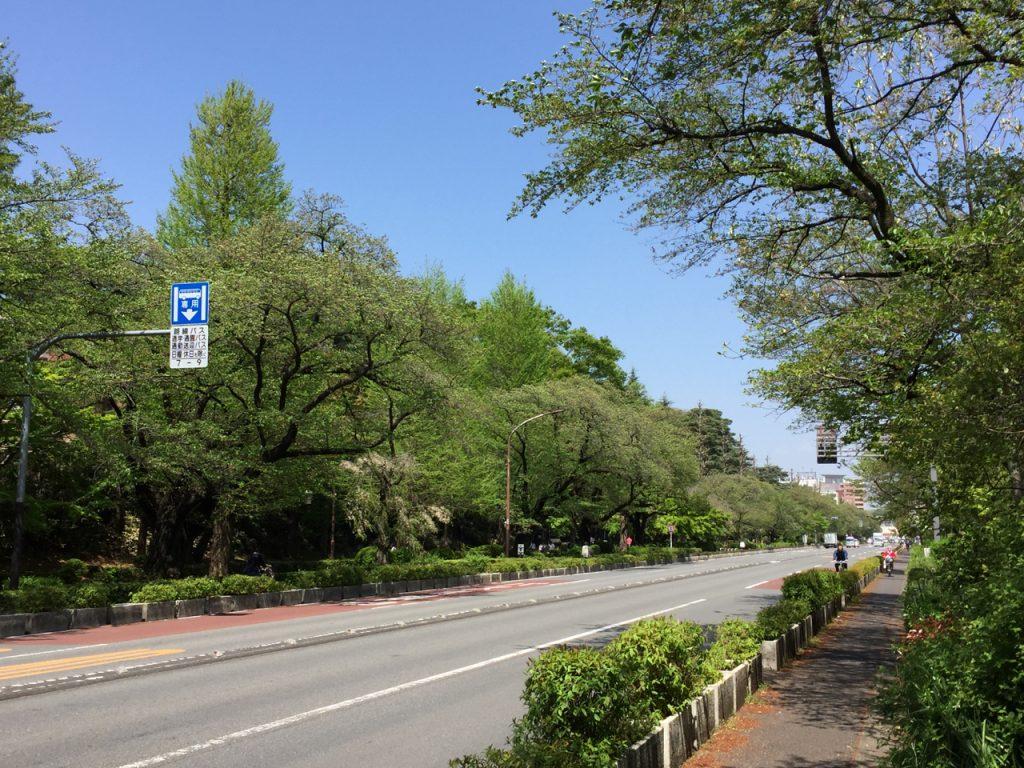 大学通り1